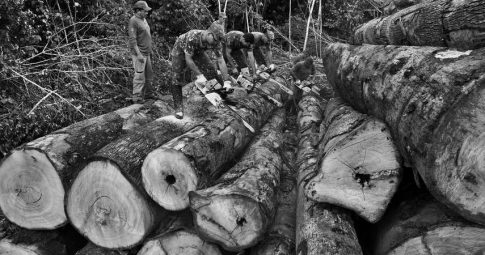 Sebastiao Salgado/Amazonas images
