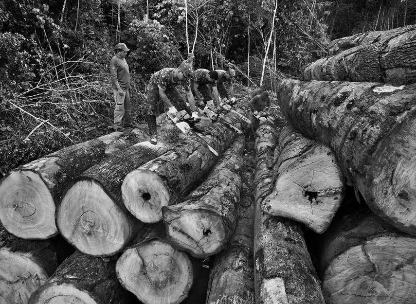 A Amazônia: entre a abundância e a violência