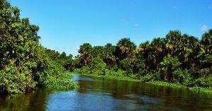 Região do rio Orinoco, na Venezuela - Reprodução
