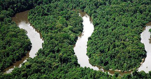 Parque Nacional Montanhas do Tumucumaque - Reprodução / Greenpeace