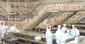Linha de produção da Brasil Foods - Reprodução