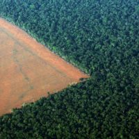 A Amazônia nos cem dias de governo Bolsonaro