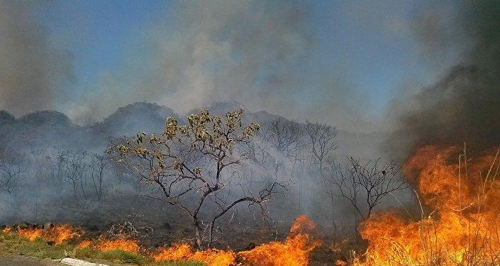 """Fogo no """"inferno"""" verde: O capital desmascarado sufocando a Amazônia"""