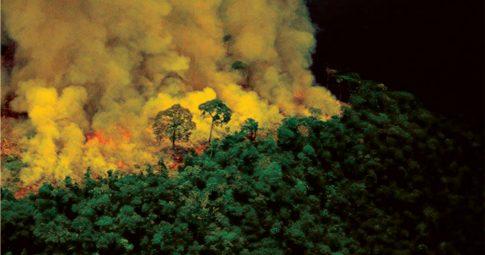 Floresta em chamas. Reprodução