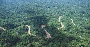 Amazônia. Reprodução