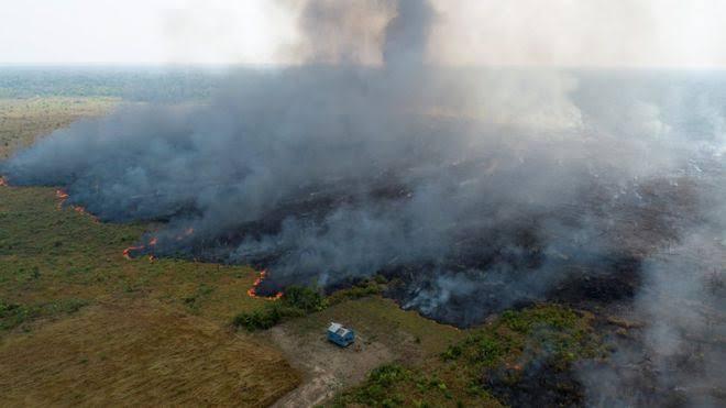 À greve climática: defender a Amazônia e o futuro