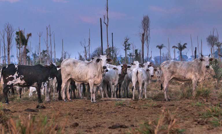 A Amazônia e a Crise Ambiental Planetária