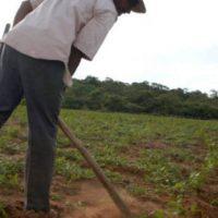 Reforma Agrária Já! Contribuição de militantes camponeses e do setor agrário ao VII Congresso do PSOL