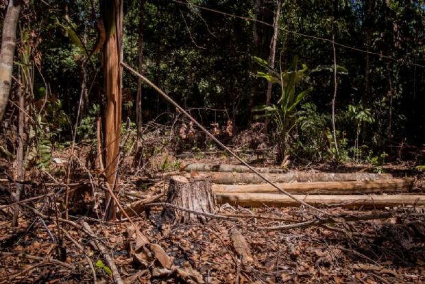 Crise socioambiental, emergência climática no século XXI e o ecossocialismo como alternativa