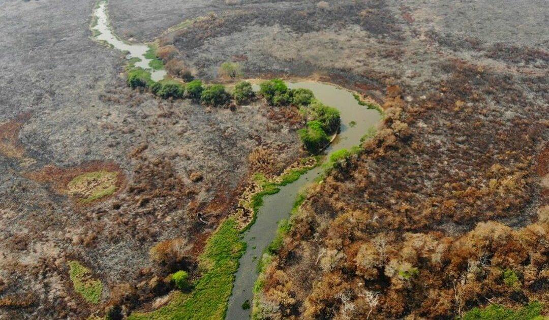 Contra a destruição da Amazônia, do Pantanal e do Brasil: às ruas no dia 25/9