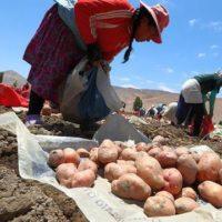 Vamos por uma segunda reforma agrária